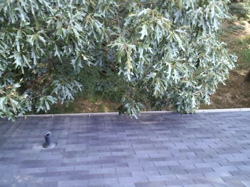 Woodstock's Best Gutter Cleaners Before and After Tree Pruning